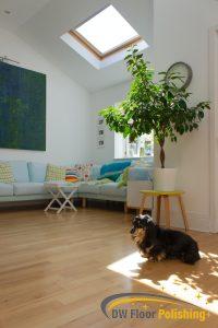 dog-sitting-on-wood-floor-wood-polishing-floor-polishing-singapore